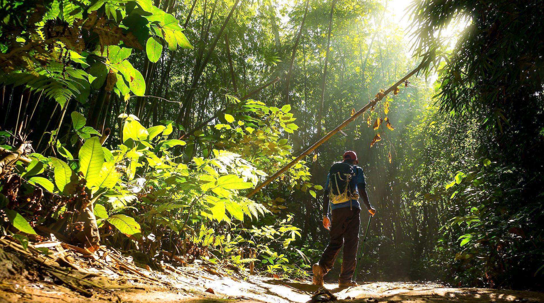 Ecoterapia: El poder curativo de la Naturaleza.