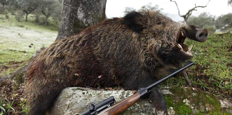 La caza en España
